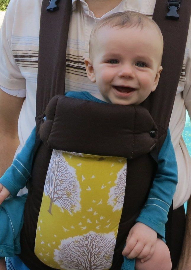 Gus in our new baby carrier.