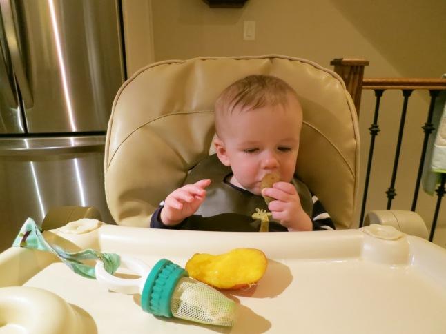 Gus enjoying some kiwi and mango (and cucumber in his mesh bag).